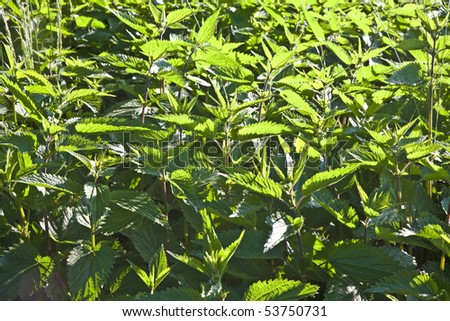 fresh green vessel, chinese burn at the meadow - stock photo