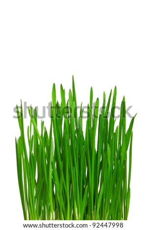 Fresh green wheat grass isolated on white background - stock photo