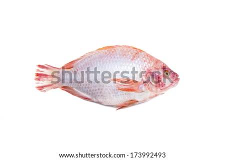 Fresh grouper isolate - stock photo