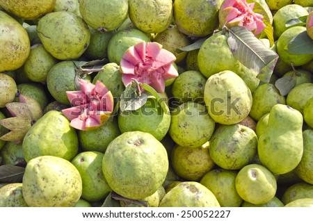 fresh guava exotic fruits group in asian street market bazaar Delhi, India - stock photo