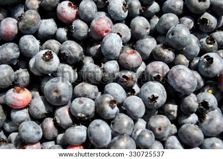 Fresh Hand Picked  Blueberries - stock photo