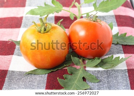Fresh harvest tomatoes on checked table cloth. Selective focus, soft focus and shallow depth of fields - stock photo