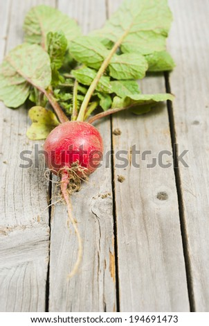 fresh harvested radish with dirt on roots, old wood table background - stock photo