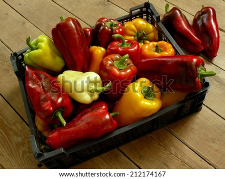 fresh harvested sweet peppers in plastic container - stock photo