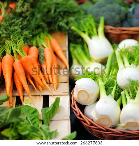 Fresh healthy bio fennel and carrots on Paris farmer agricultural market - stock photo