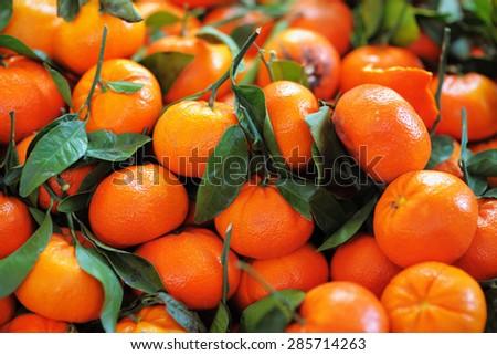 Fresh healthy bio tangerine on Paris farmer agricultural market  - stock photo