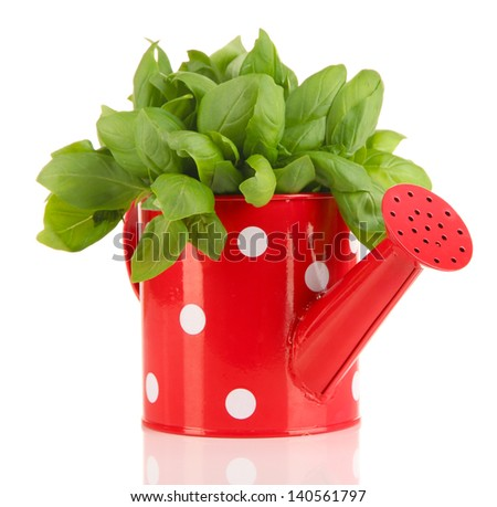 Fresh herb in colorful watering can isolated on white - stock photo
