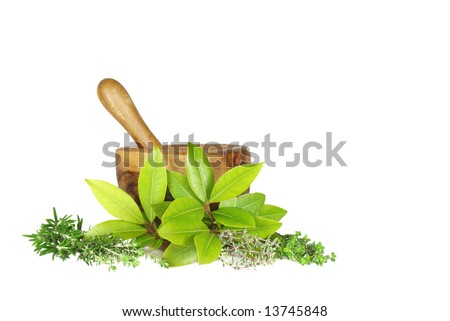 Fresh herb selection  of rosemary, golden thyme, bay leaves, silver thyme and common thyme (left to right) with an olive wood pestle and mortar to the rear. Set against a white background. - stock photo