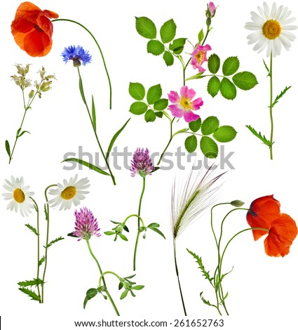 Fresh herbs grass plant  flowers - collection set isolated on white background - stock photo