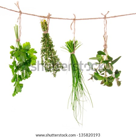 Fresh herbs hanging isolated on white background - stock photo