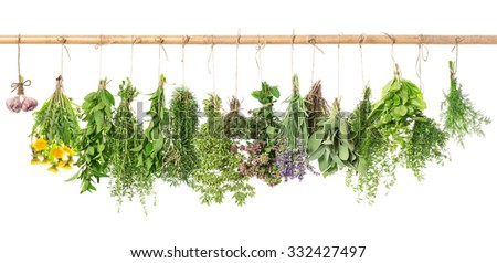 Fresh herbs hanging isolated on white background. Basil, rosemary, sage, thyme, mint, oregano, dill, marjoram, savory, lavender, dandelion, garlic - stock photo