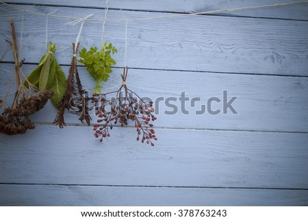 Fresh herbs hanging over wooden background blue color - stock photo