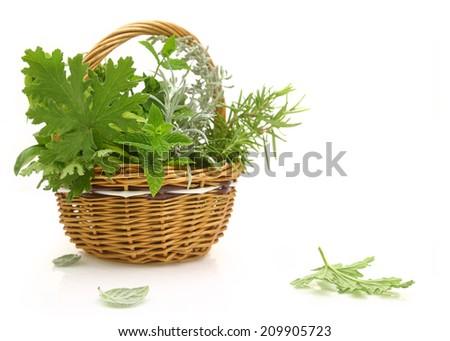 Fresh herbs in a wicker basket - stock photo