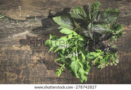 Fresh herbs in garden. Day light - stock photo