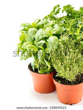 fresh herbs in gardening pots on white background. basil; thyme, parsley; rosemary - stock photo