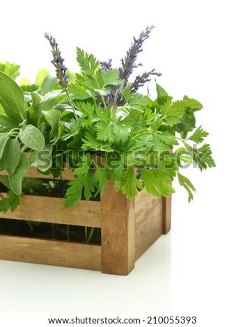 Fresh herbs in wooden box - stock photo
