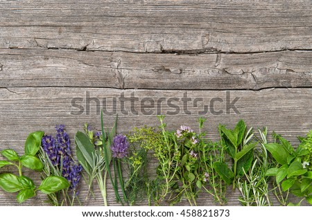 Fresh herbs on wooden background. Basil, rosemary, sage, thyme, mint, dill, oregano, marjoram, savory, lavender - stock photo