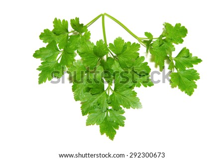 fresh herbs parsley isolated on white - stock photo