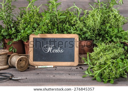 Fresh herbs with chalkboard and vintage tools. Food ingredients rosemary, thyme, oregano. - stock photo