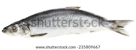 Fresh herring fish isolated on white - stock photo