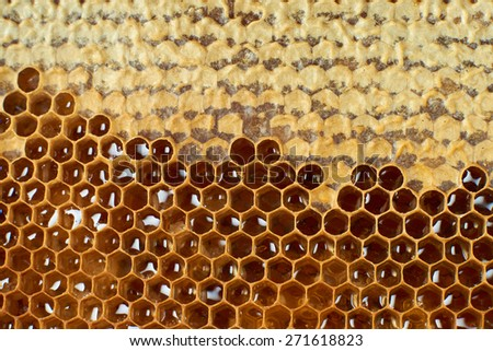 Fresh honey in comb, background - stock photo