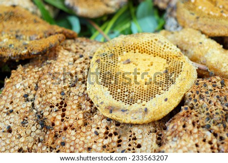 fresh honey in the comb - stock photo