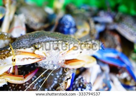 Fresh Horse Crab:Close up,Selective focus  - stock photo
