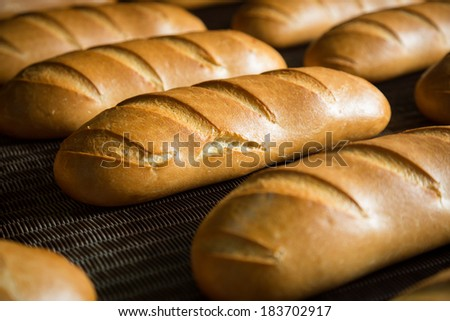 Fresh hot baked bread loafs on the production line  - stock photo