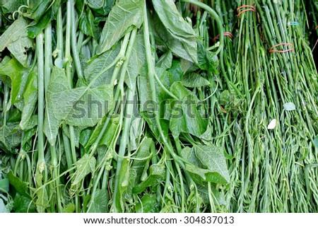 fresh ivy gourd - stock photo
