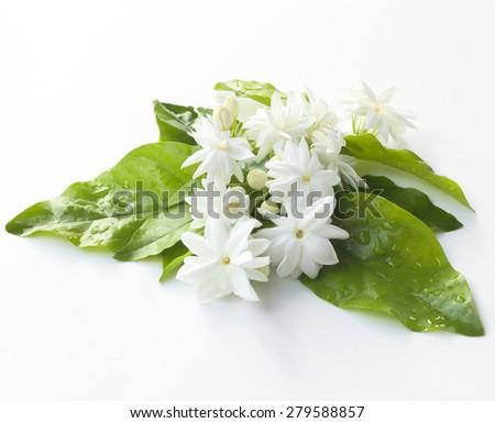Fresh Jasmine from the garden Thailand - stock photo