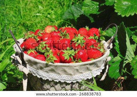 fresh, juicy and healthy strawberries, on green background - stock photo