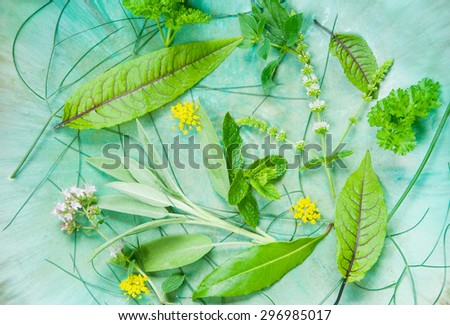 fresh kitchen herbs straight from the garden - stock photo