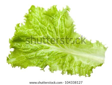 Fresh Lactuca sativa leaf isolated on white background - stock photo