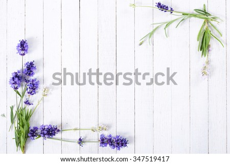 fresh lavender flowers on white wood table background - stock photo