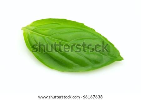 Fresh leaf of basil - stock photo
