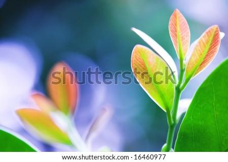 Fresh leaves - stock photo