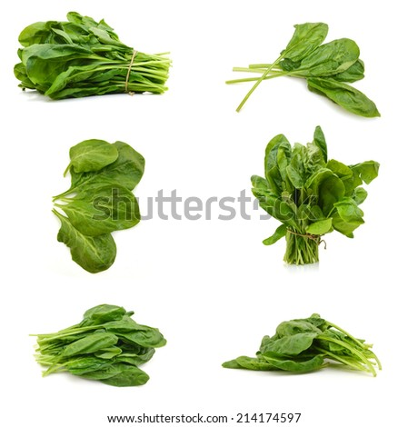 Fresh leaves of spinach  - stock photo