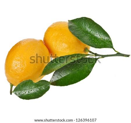 Fresh Lemon fruits isolated on a white background - stock photo