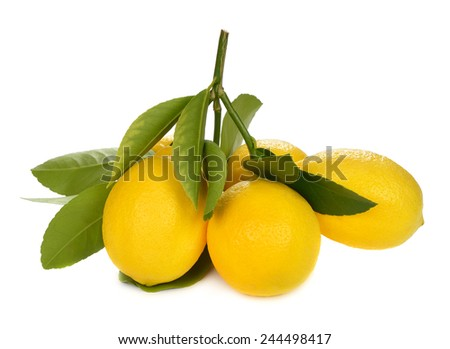 Fresh lemons with a sprig isolated on white background - stock photo