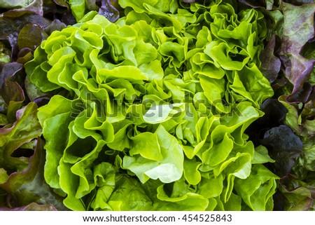 Fresh lettuce greens at a farmers market - stock photo