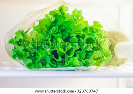 Fresh lettuce on a shelf in the refrigerator at home - stock photo