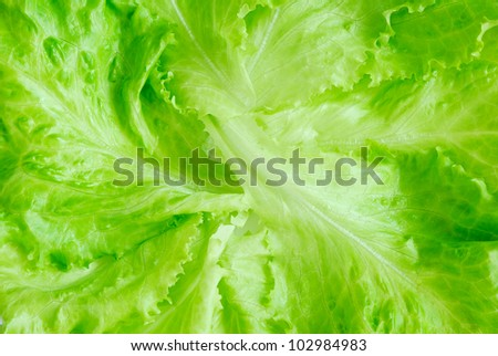 Fresh lettuce, top view - stock photo