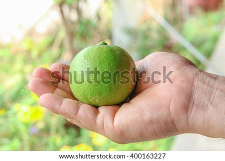 Fresh lime in Thailand no.3 - stock photo