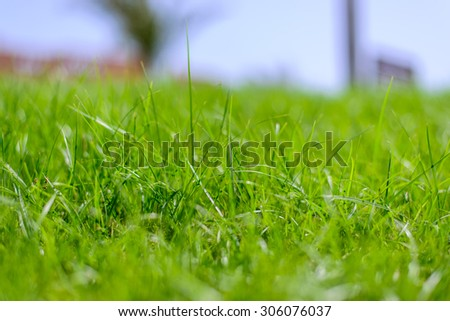 Fresh lush spring or summer green grass background texture viewed low angle with blue sky horizon - stock photo