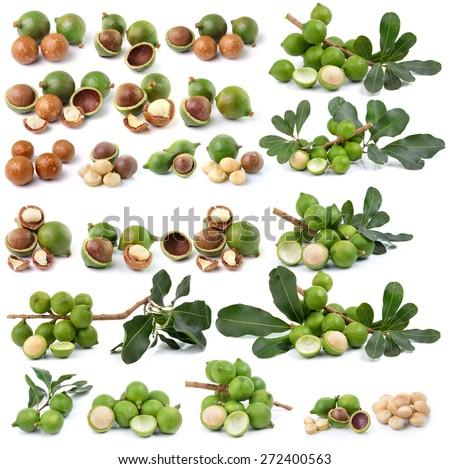 fresh macadamia nut on white background - stock photo
