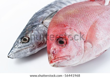 Fresh Mackerel and Red Snapper - stock photo