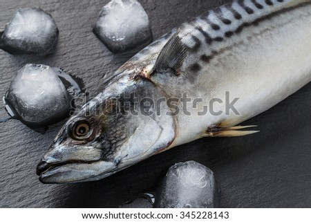 Fresh mackerel cooled with ice on a slate board - stock photo