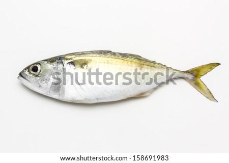 Fresh mackerel fish isolated on the white background  - stock photo
