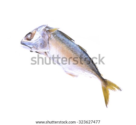Fresh mackerel fish on the white background - stock photo