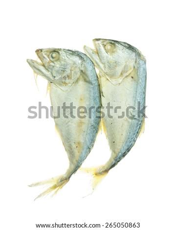 Fresh mackerel isolated on white background. - stock photo